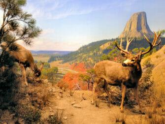 The American Museum of Natural History in New York - habitat