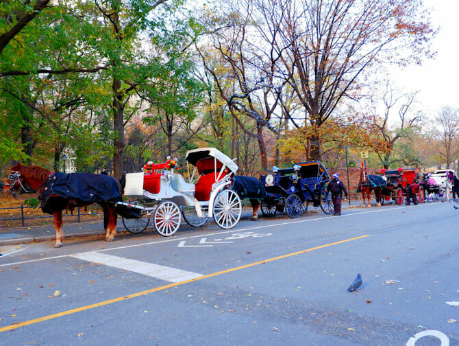 A Carriage ride in Central Park - carriage