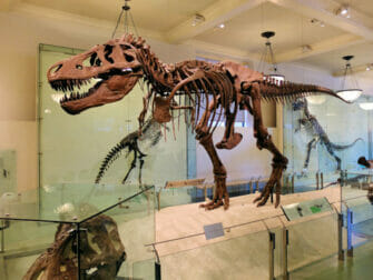 The American Museum of Natural History in New York - Dinosaur