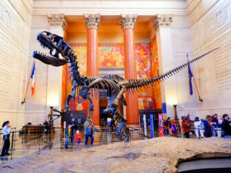 American Museum of Natural History in New York - T Rex