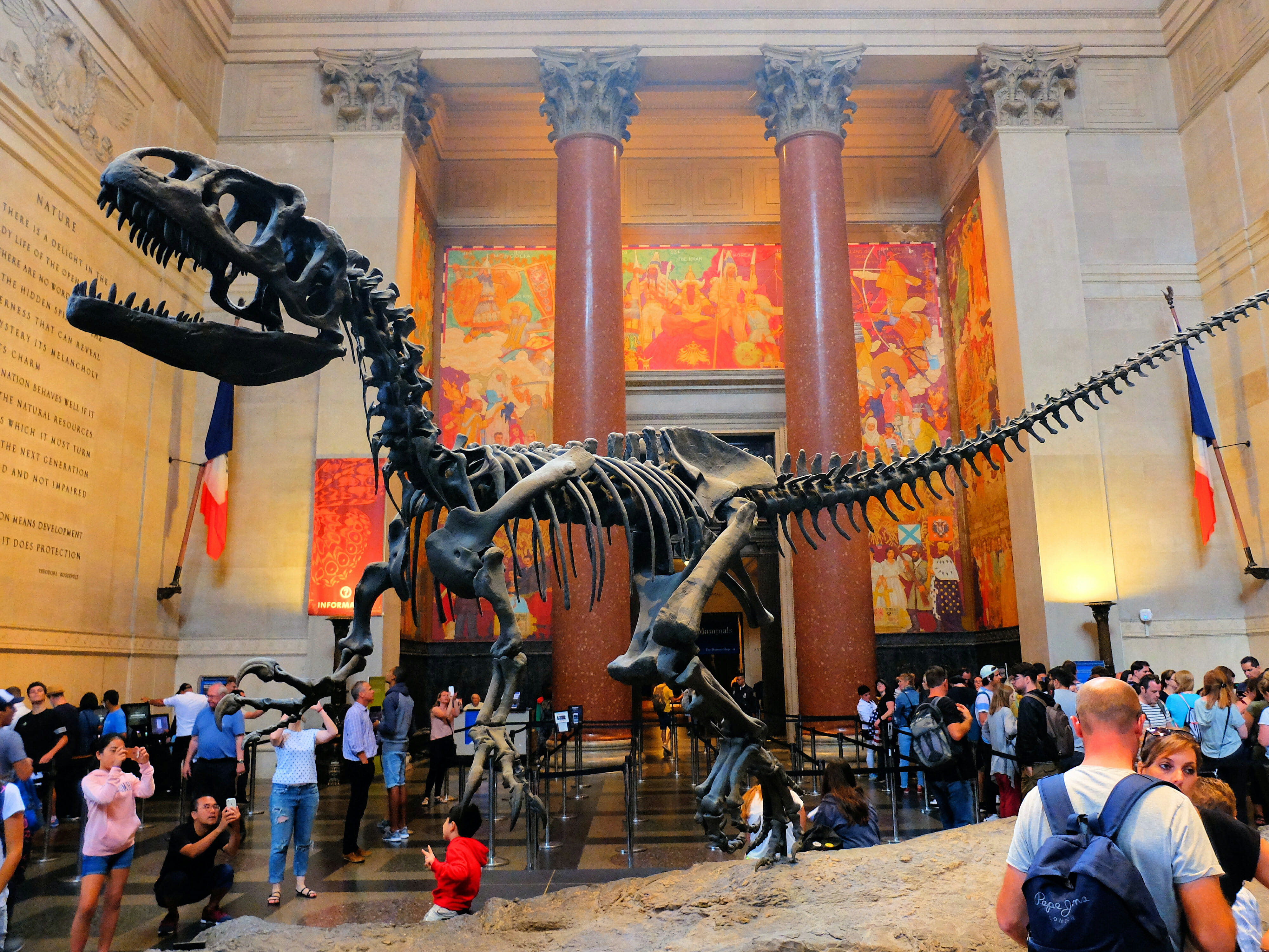 American Museum of Natural History in New York – T Rex – High Quality Wallpaper
