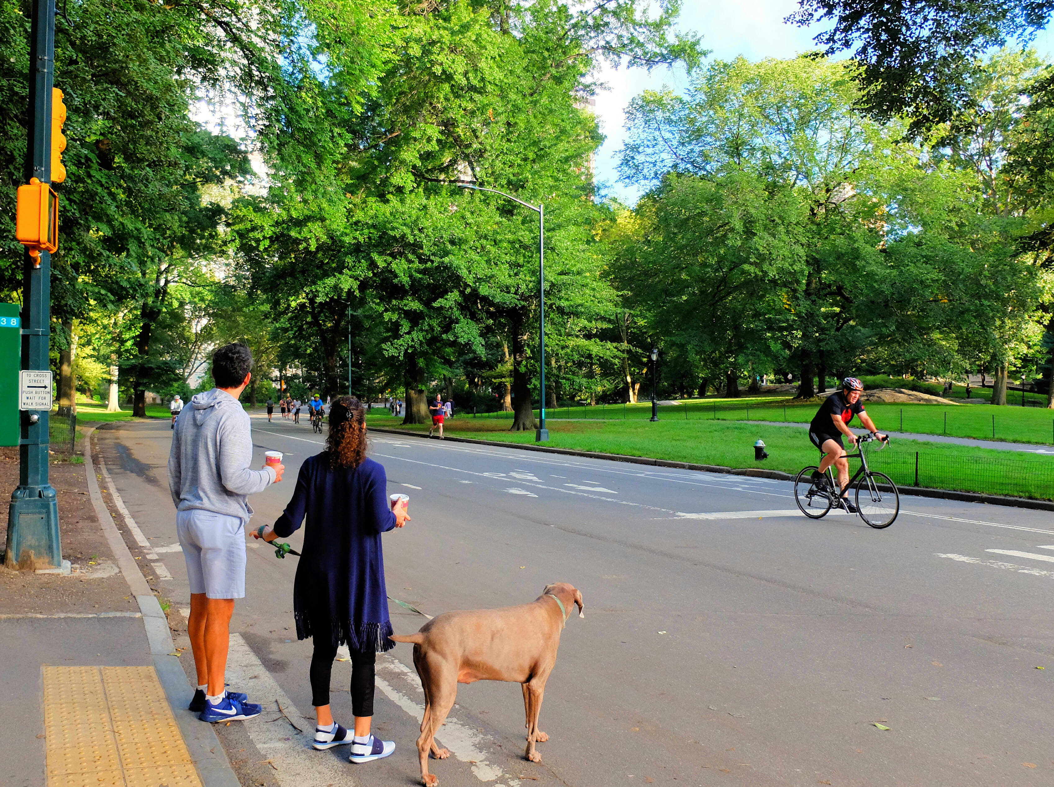 Biking in Central Park – High Quality Wallpaper