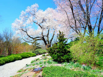 Botanical Gardens in New York - New York Botanical Garden in The Bronx